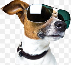 Dog With Sunglasses PNG