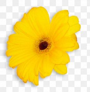 Transvaal Daisy Common Sunflower Cut Flowers Pot Marigold Petal PNG