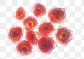 Fire Red Rose - Rose High-definition Television Wallpaper PNG