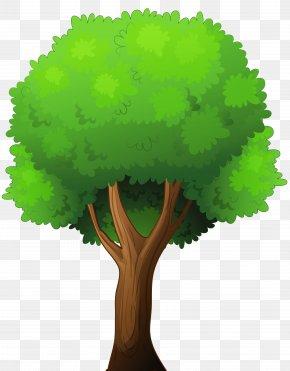 Tree Clip Art - Tree Hackus Clip Art PNG