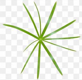 Leaf - Leaf Grasses Plant Stem PNG
