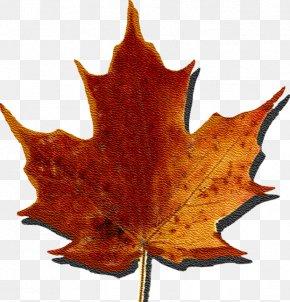 Sugar - Maple Syrup Quebec Temps Des Sucres Sugar Maple Leaf PNG