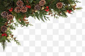 Christmas Decoration - Christmas Common Holly Stock Photography Clip Art PNG