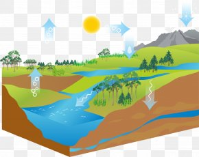 Air Cycle Ecosystem - Diagram Water Cycle Stock Illustration PNG
