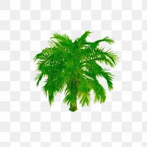 Tree - Tree Image Landscape Download PNG