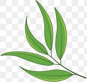 Leaf Plant Stem Grasses Flower PNG