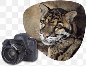 Cat Park - Tiger Clouded Leopard Wildcat Great Cats World Park PNG
