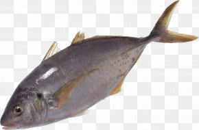 Fish Image - Milkfish Salmon Oily Fish Sole Fish Products PNG