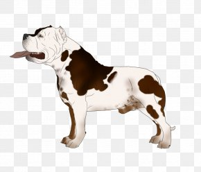 Think First Brown Puppy - Olde English Bulldogge American Bulldog Dog Breed Kennel PNG