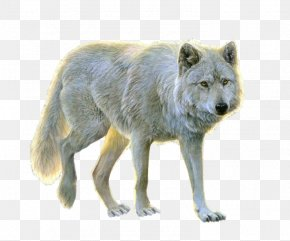 Wolf - Arctic Wolf Clip Art PNG