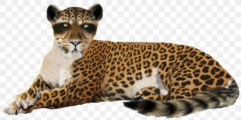 Leopard Jaguar Cheetah Lion, PNG, 2361x1182px, Leopard, Animal, Big Cat, Big Cats, Carnivoran Download Free
