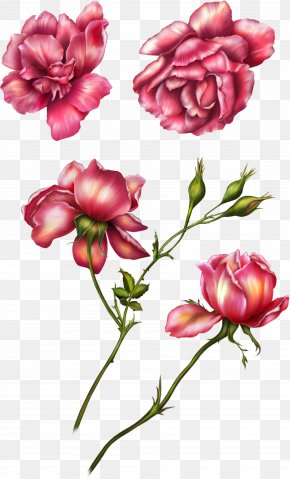 Pink Roses - Flower Garden Roses Clip Art PNG