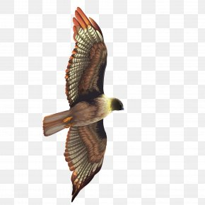 Vector Flying The Eagle - Bird Crows Hawk Eagle PNG