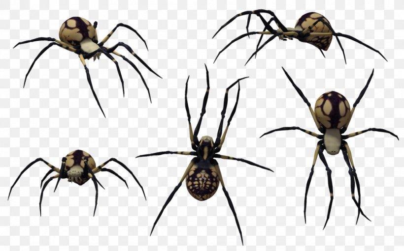 Redback Spider Southern Black Widow Spider Web Clip Art Png