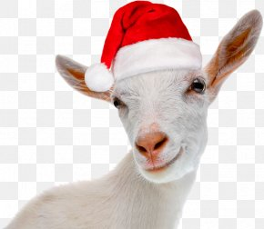 Goat - Yule Goat Christmas Card Greeting & Note Cards PNG