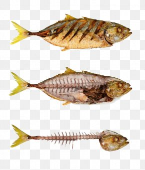 Fish And Meat - Fried Fish Fish Bone Stock Photography Fishbone PNG