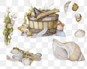Seashell - Seashell Molluscs Mollusc Shell Cuisine Shellfish PNG