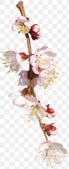 Flower - Cut Flowers Floral Design Spring Plant Stem PNG