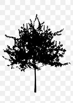 Silhouette Trees - Tree Silhouette Clip Art PNG