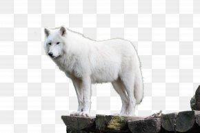 Wolf - Dog Alaskan Tundra Wolf Arctic Wolf Arctic Fox PNG