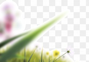 Lens Blur Blurred Leaves Blooming Flowers - Camera Lens Icon PNG