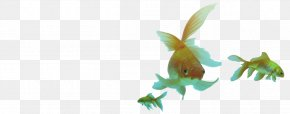 Goldfish - Customer Service Marketing Advertising Agency PNG