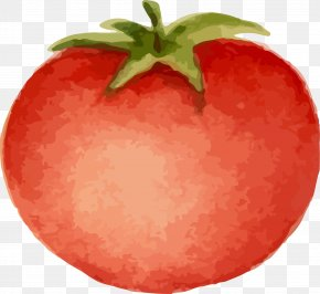 Hand Painted Tomato - Tomato Cartoon Download Animation PNG