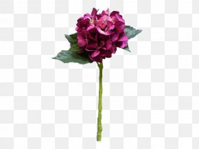 Lilac Wine - Garden Roses The Sims 2: Celebration! Stuff Cut Flowers Flower Bouquet Cabbage Rose PNG
