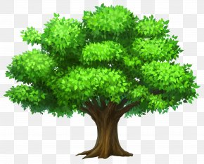 Oack Tree Clipart Picture - Tree Oak Clip Art PNG