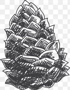 Vector Painted Pinecone - Drawing Black And White Croquis Sketch PNG