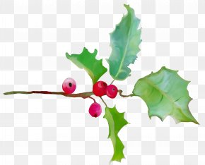 Currant Plane - Holly PNG