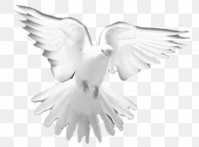 DOVES - Holy Spirit Prayer Christian Church Clip Art PNG