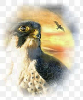 Painting - Painting Falcon Bird Art Canvas PNG