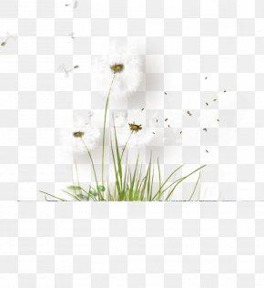 White Dandelion - Petal Flora Tile Pattern PNG
