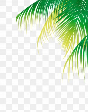 Vascular Plant Sunlight - Palm Tree Background PNG