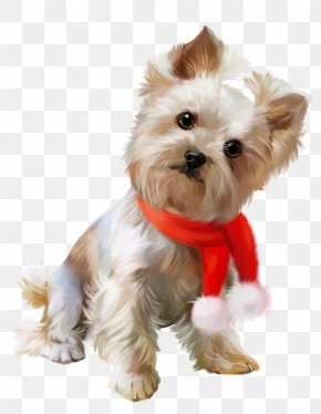 Puppy - Yorkshire Terrier Cairn Terrier Morkie Puppy Maltese Dog PNG