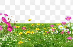 Green Meadow PNG