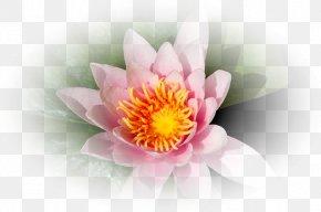 Corel Flower Petal Clip Art PNG