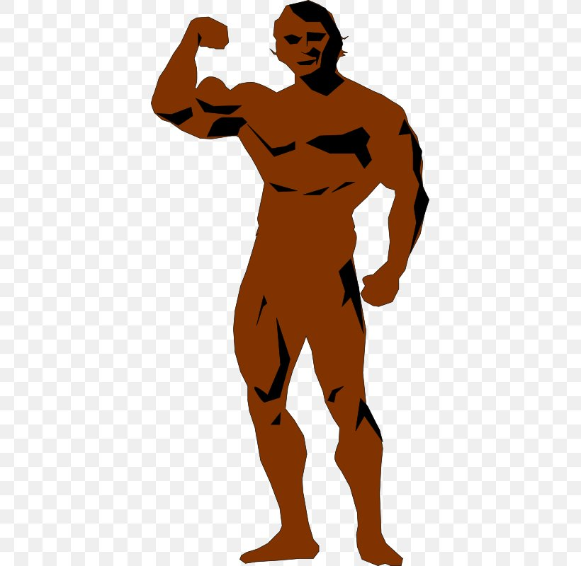 Bodybuilding Human Body Clip Art Png 393x800px Bodybuilding Arm Art Dumbbell Exercise Download Free