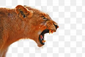 Tooth Snout - Lion Roar Facial Expression Wildlife Snout PNG