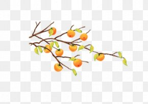 Yellow Autumn Leaves Orange Tree Branch - Cartoon Fruit Tree Tangerine PNG