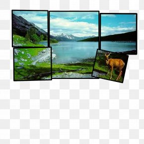 Filmstrip - Television Landscape Display Device Ecosystem Technology PNG