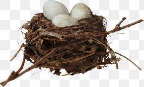 Nest - Bird Nest Egg Clip Art PNG