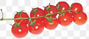 Tomato Image - Cherry Tomato Clip Art PNG