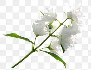 White Flower Clipart Image - Flower White Clip Art PNG
