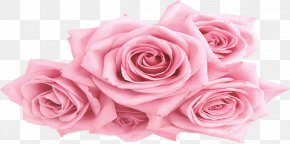 Peony - Garden Roses Centifolia Roses Pink Floral Design PNG