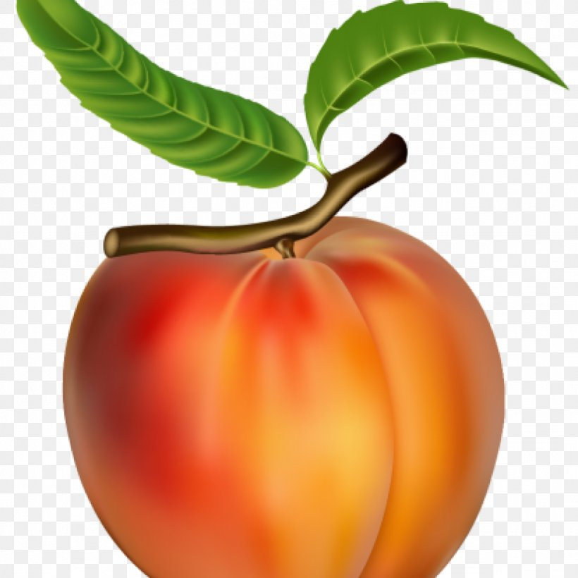 Clip Art Vector Graphics Peach Fruit Png 1024x1024px Peach Apple Apricot Diet Food Food Download Free