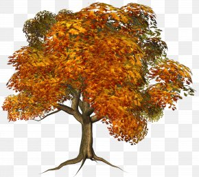 Large Fall Tree Clipart - Tree Autumn Clip Art PNG