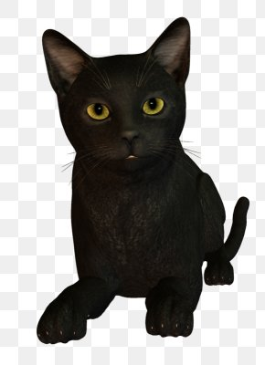 Animated Cat Black - Korat Bombay Cat Burmese Cat Kitten Black Cat PNG