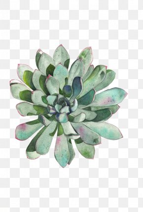 Succulent Plants - Paper Succulent Plant Watercolor Painting Printmaking Drawing PNG
